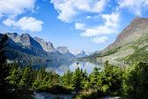 Oca selvaggia isola, lago St marys, parco nazionale del ghiacciaio