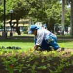 Постер, плакат: Gardener in Parque Kennedy in Miraflores Lima Peru
