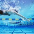 Постер, плакат: Female swimmers racing in swimming pool