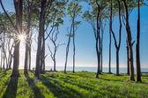 The sun shines through some trees