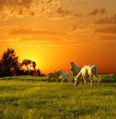 Famiglia di cavalli al tramonto