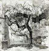 Tree near ruins