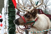 Jingle Bell Reinder