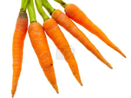 Carrots. 图片库■中国图片