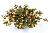 Rose von Jericho (Selaginella Lepidophylla), falsche Rose von Jericho, andere Trivialnamen sind Jericho rose, Auferstehung Moos, Dinosaurier-Pflanze, Siempre Viva, steinerne Blume, Doradilla, Auferstehung-Pflanze