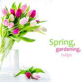 Lila, rózsaszín és fehér tulipánok