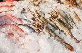 čerstvé krevety v ledu na trh