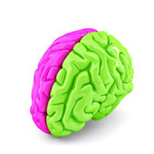Koncepce mozku
