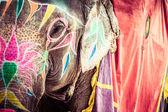 Slon. Indie, jaipur, státu Rádžasthán