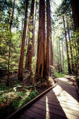 Redwood national park in california, usa