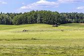 Krajinná oblast Suwałki, Polsko