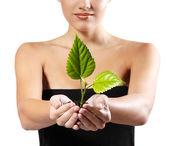 Tree shoot in female hands