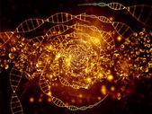 Světla DNA