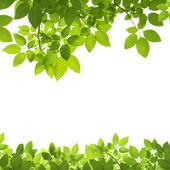Zelené listy hranice na bílém pozadí
