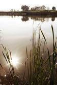 Luce del sole che si riflette nellacqua dello stagno