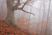 Old tree in fog in autumn
