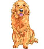 Vektorové náčrtu červenou lovecký pes plemene zlatý retrívr