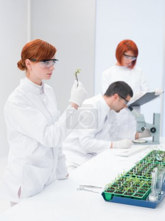 Постер, плакат: Scientists in a genetic engineering laboratory, холст на подрамнике