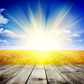 Gelbe Weizenfeld unter schönen Sonnenuntergang Wolke Himmel Hintergrund