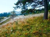 Morning misty autumn mountain landscape