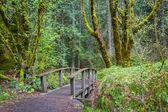 Escursionismo percorso in una zona boscosa con vividi verdi in primavera in oregon
