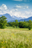 Summer Landscape in Salzkammergut