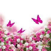 Kytice růží a tulipány s motýly