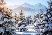 Zimní horské scenérie