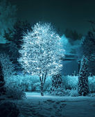 Illuminated tree in winter garden