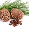 Постер, плакат: Cedar cones with nuts