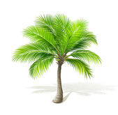 Palm tree with shadow isolated on white Vector Eps 8