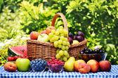 Kosár friss bio gyümölcsök a kertben