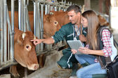 Farmer and veterinarian checking on cows