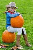 Harvest of pumpkins, autumn in the garden