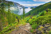Mountain trail at the forest. The Tatra Mountains, Carpathians. Nature reserve.