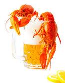 Crawfishes a džbánek piva