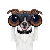 Binoculars searching looking observing dog