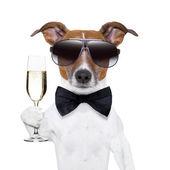 Evviva il cane con un bicchiere di champagne
