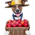 Постер, плакат: Farmer dog