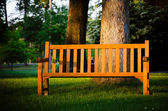 Park bench highlighted by late afternoon sun in tranquil setting