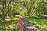 Lesy v logan botanické zahrady
