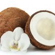 Постер, плакат: Coconuts with flower isolated on white