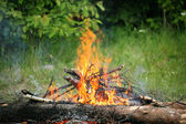 Bonfire campfire fire summer forest nature fire