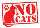 žádné kočky