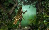 Gentle Hunter