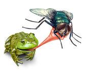 Bug cattura rana con una lingua appiccicosa che tiro come un concetto di natura del ciclo naturale della vita, dove un anfibio verde mangia un insetto volano per la sopravvivenza su sfondo bianco