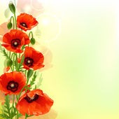 Poppy background