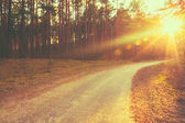 Forest road sunset sunbeams