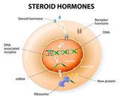 Steroidní hormony reakce. vektor