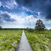 High venn boardwalk trail Belgium Eifel nature park moorland clouds tourism